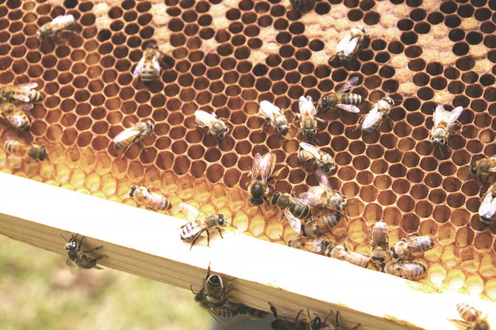 bees straight edit