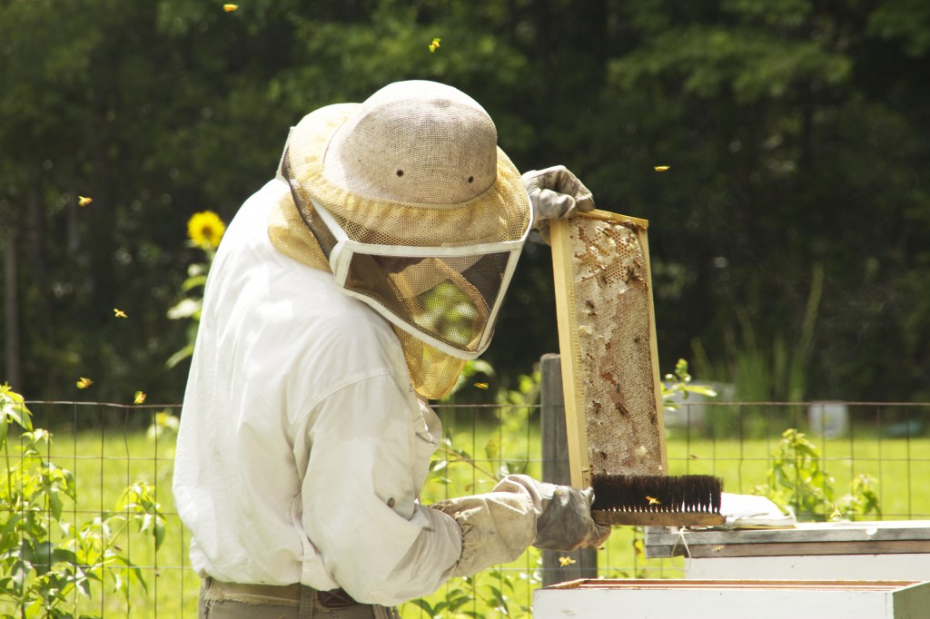 Richard Ward brushes a frame of bees. (Photo by Britton Holmes)