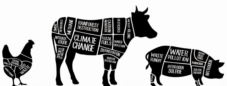 Animal Agriculture's effects on Climate Change - Synergies